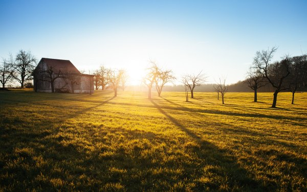 field with barn and winter trees at sunrise